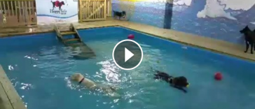 pool party honden